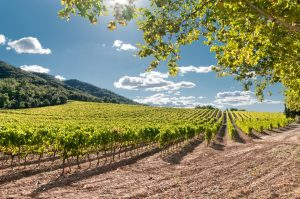 Spanish Wine Regions have different micro-climates